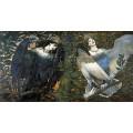 Сирин и Алконост - птицитe на радостта и печала (1896)